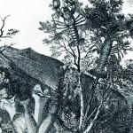 stefan heuer - langustenbaum